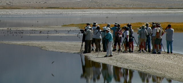 Birders at Owens Lake