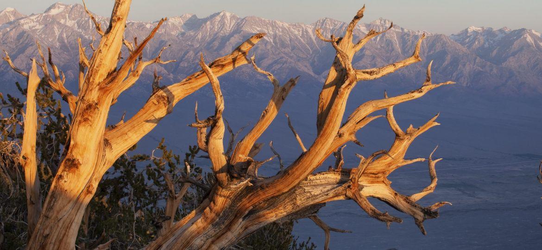 bristlecone sunset owens valley