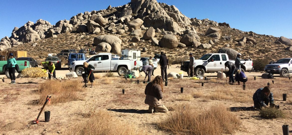 volunteers planting buttermilk boulders vehicles