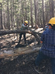 crosscut saw volunteers Yosemite