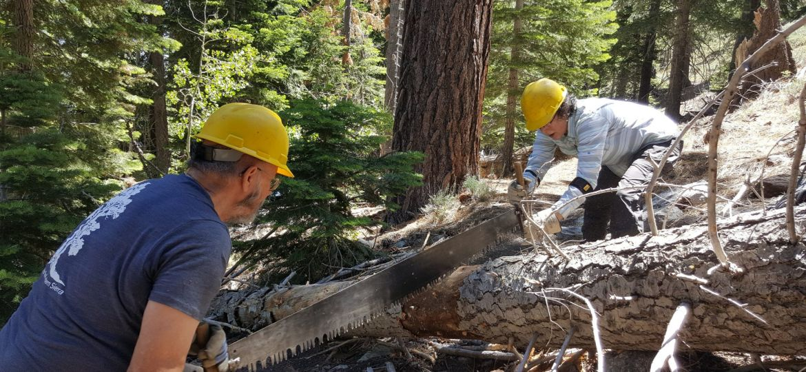 crosscut saw volunteers forest