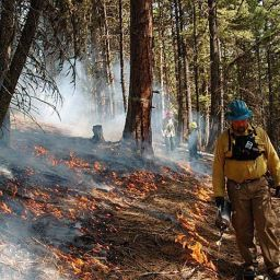 Fire-prescribed fire forest understory