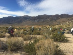 Volunteers pick up trash at bodie hills