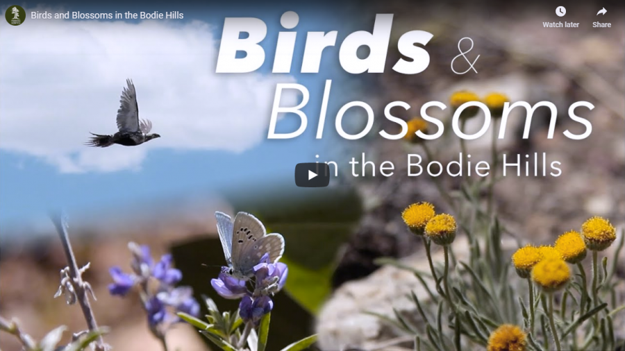 birds-and-blossoms-featured-image